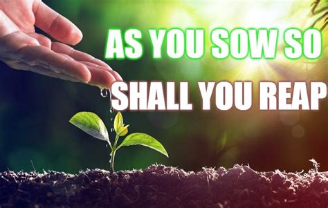 As you sow shall you reap essay jpg 765x486